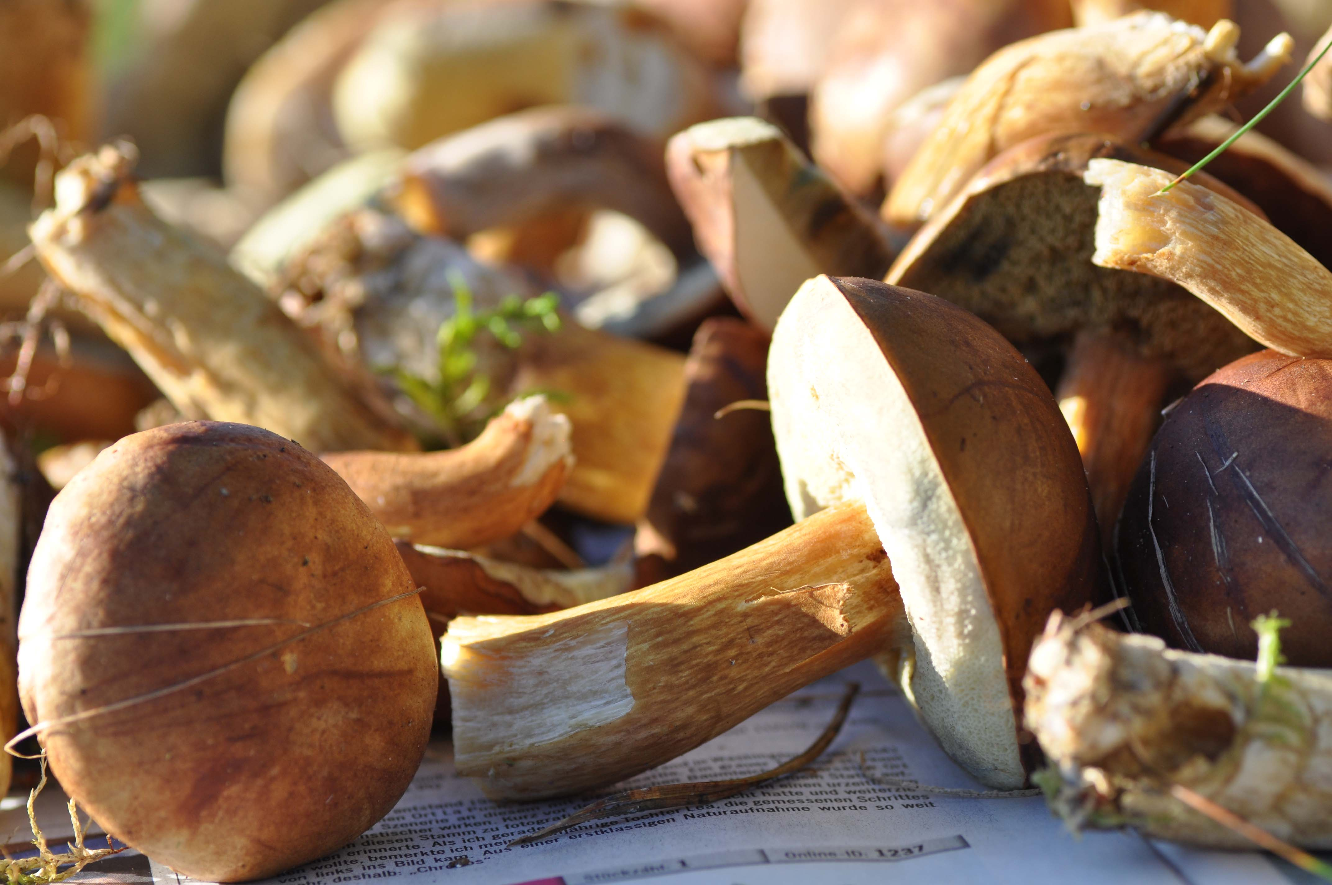 wild mushroomsII