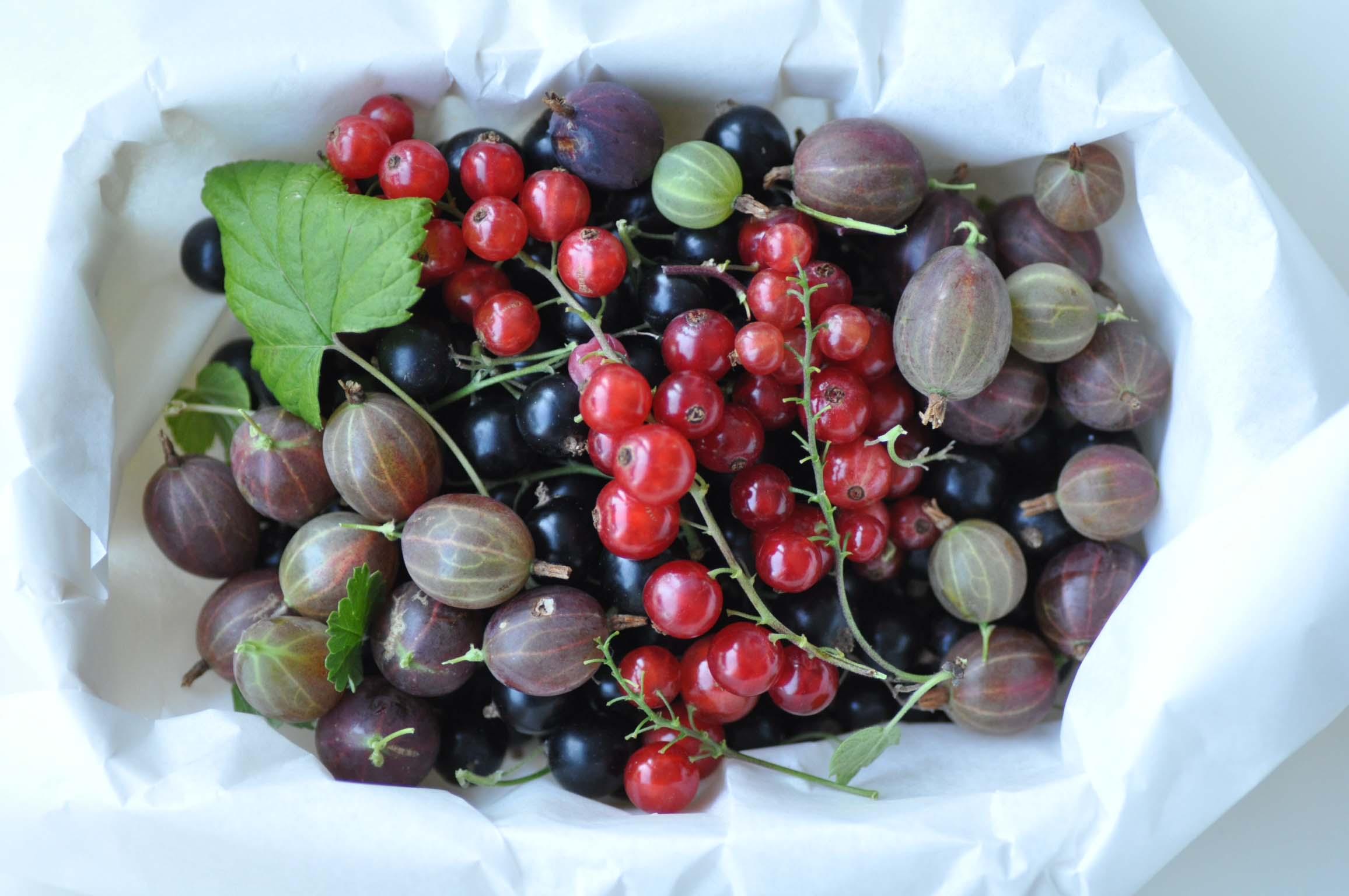 berries_bearbeitet-1