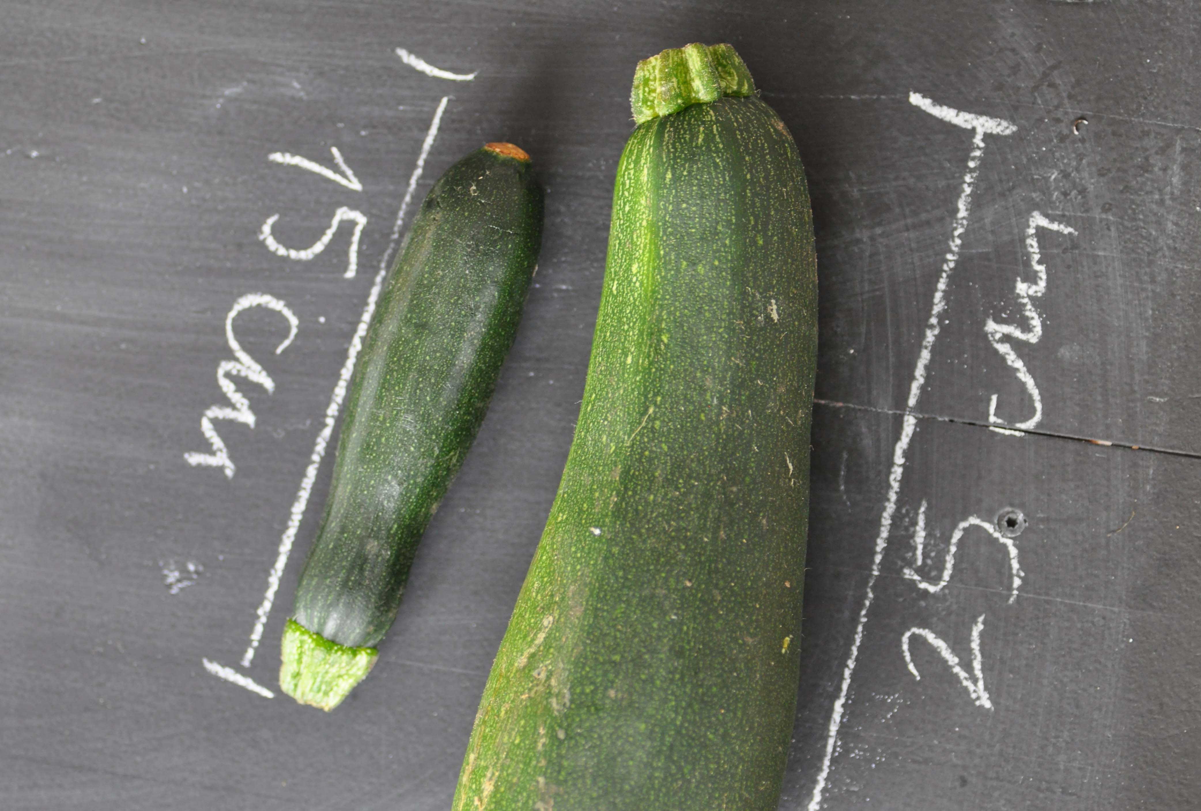 courgette 15 cm_bearbeitet-1