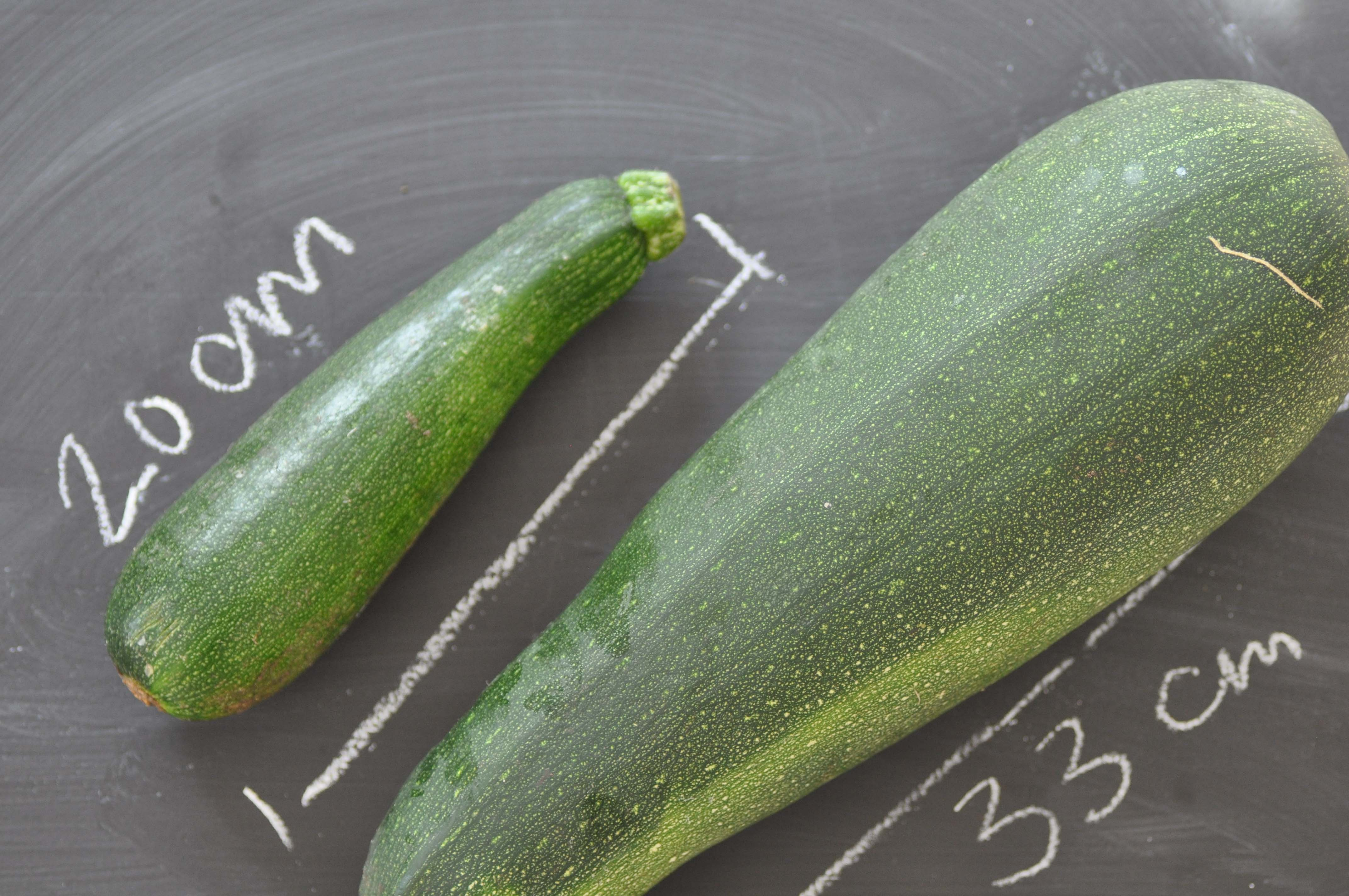 courgette 33 cm_bearbeitet-1