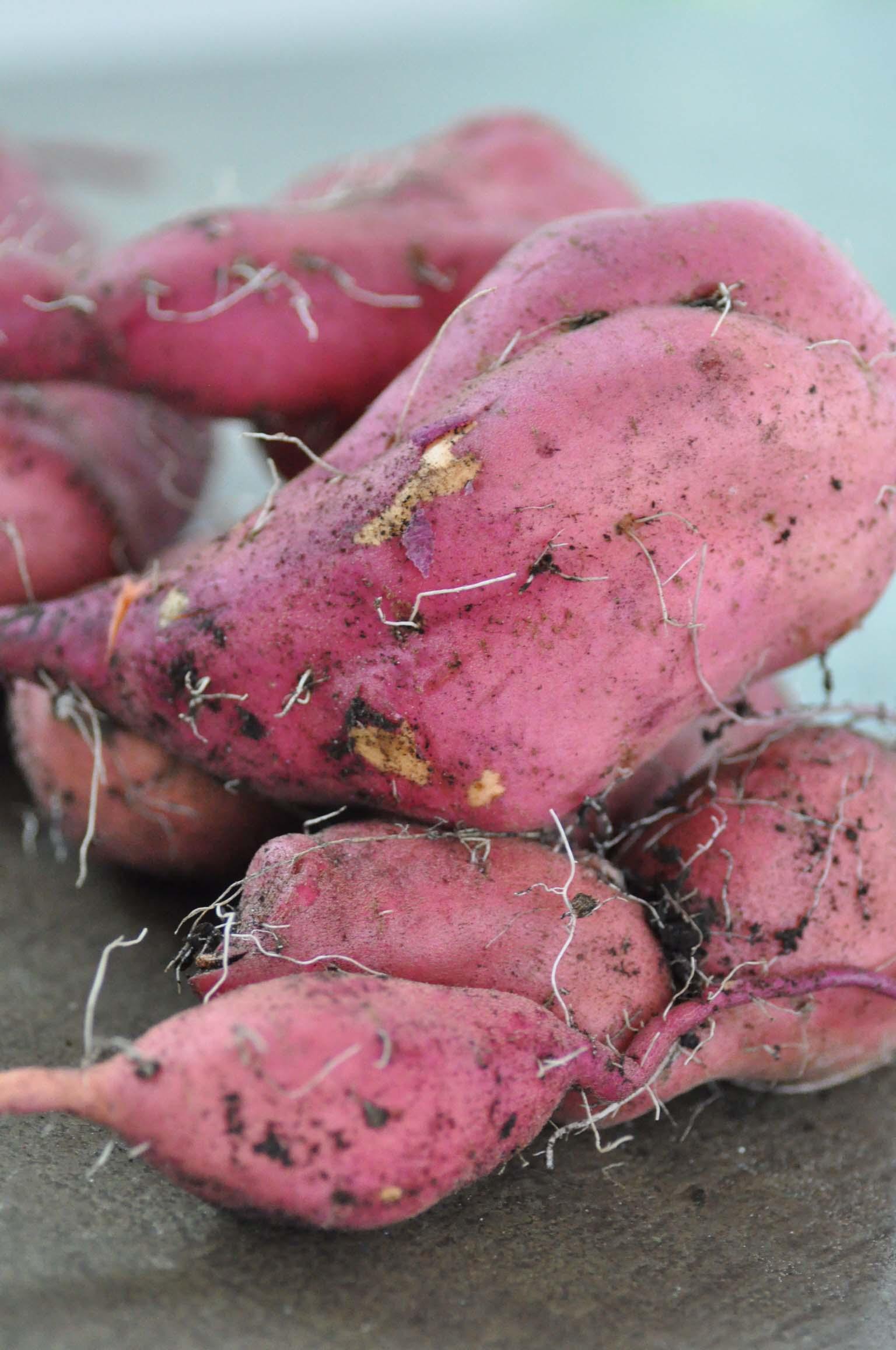 sweet-potato_2_bearbeitet-1